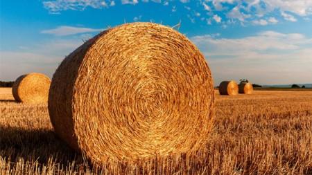 farming-image-2